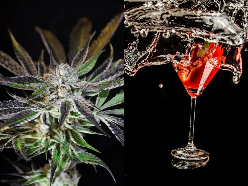 Cannabis leaf close-up beside martini class with splashing red alcohol and vegetable garnish