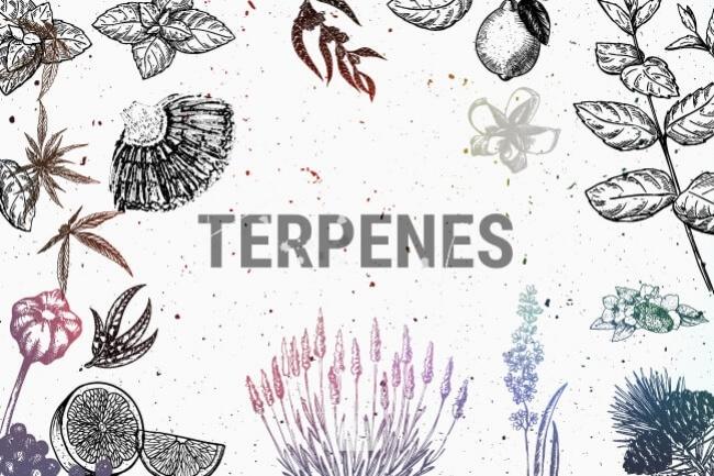 Word TERPENE centered between illustrated plants