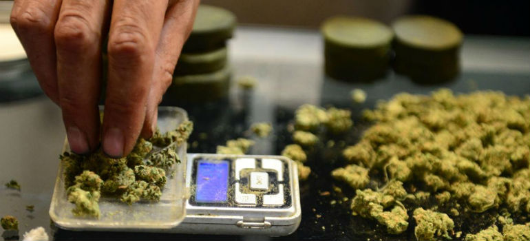 Hand placing cannabis nuggets onto scale for weighing