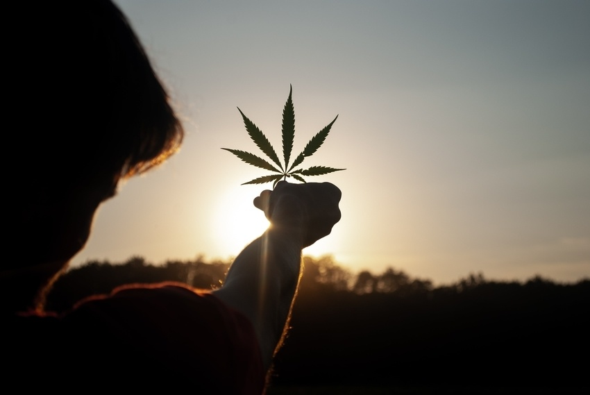 Man holding cannabis leaf toward rising sun